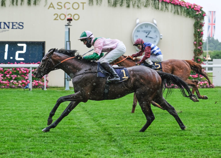 Highland Chief was victorious at Royal Ascot in June