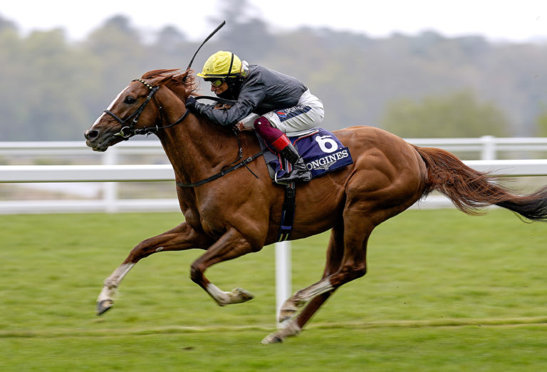 Stradivarius will be bidding for a Gold Cup four-timer